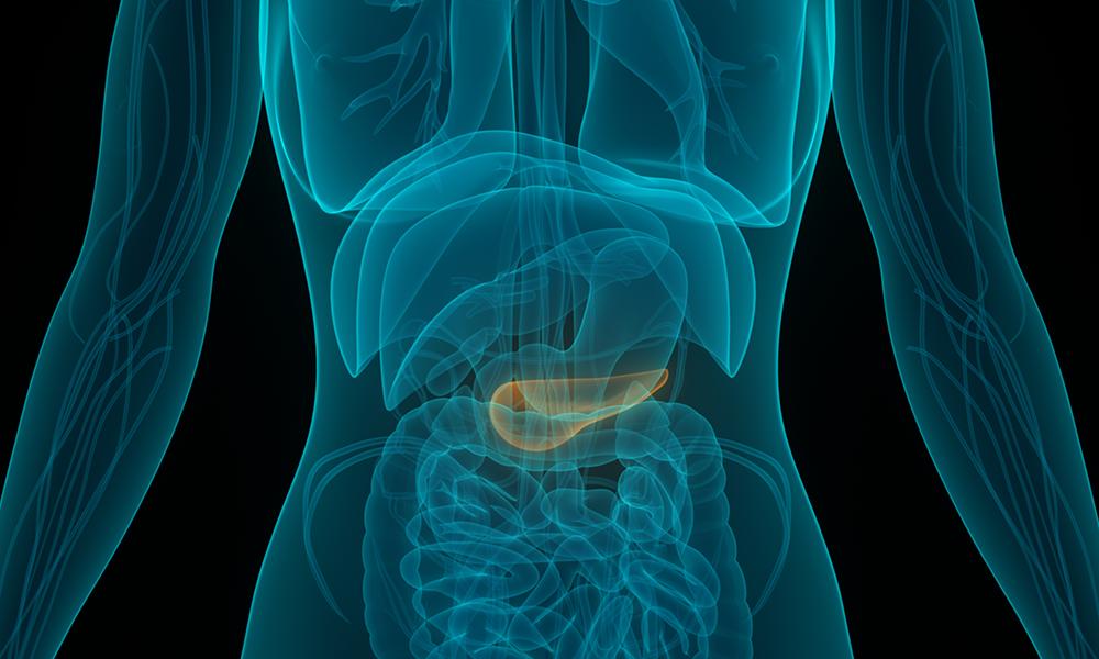 Pancreas-Organ-Illustrated-Feature-DTM